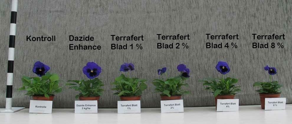 Blommor Terrafert Blad 2