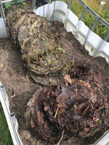 Fermenterad maskros och fermenterad löv blandas med gammal odlingsjord
