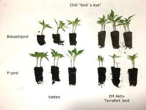 Chilitest med och utan EM Aktiv och Terrafert Jord