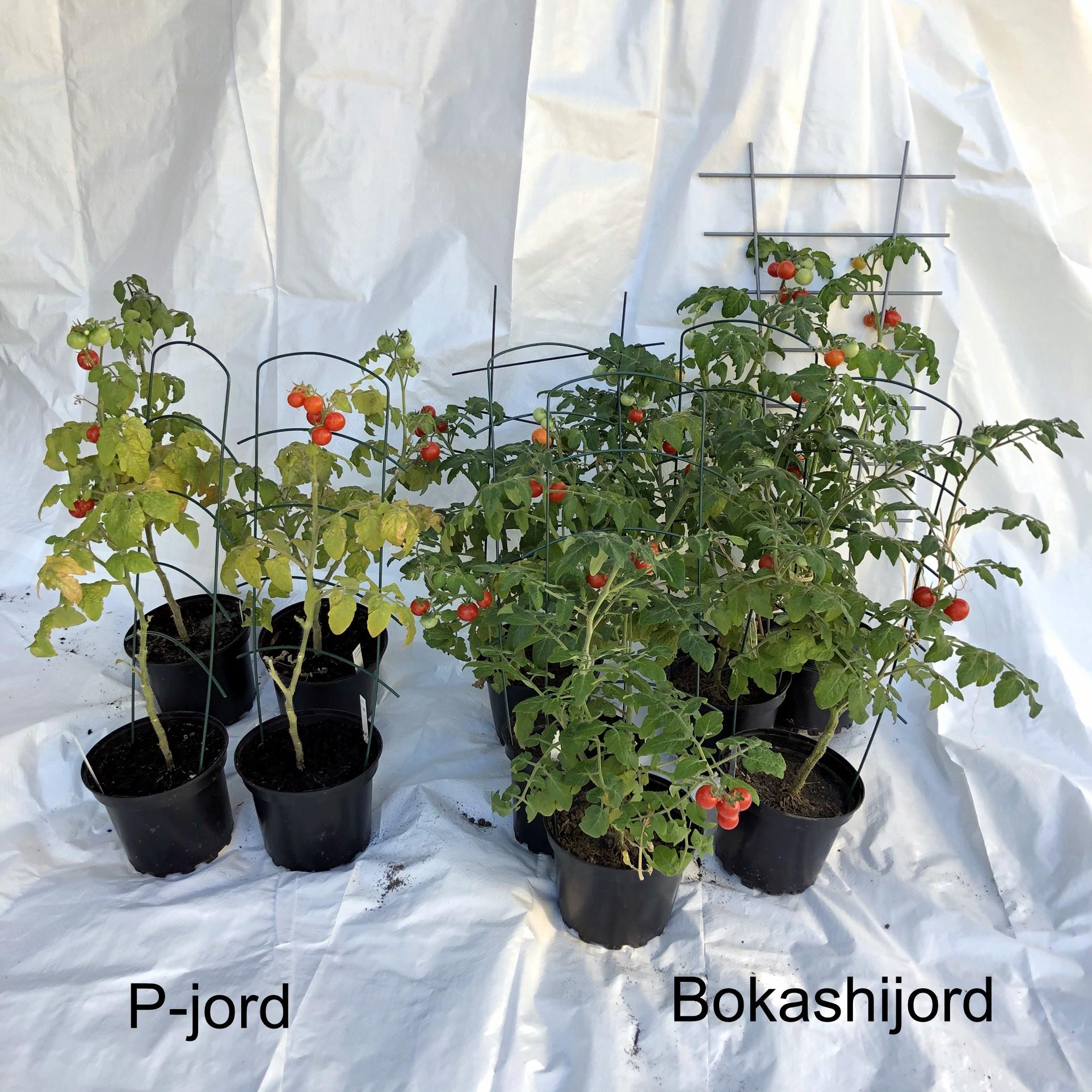 Resultat av test med bokashijord och köpt jord