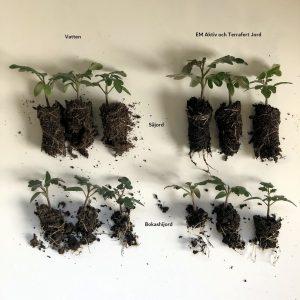 tomattest med olika jord